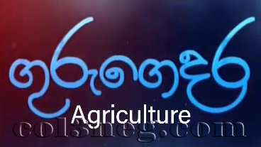 guru-gedara-agriculture-(a-l)-05-09-2020-tamil-medium